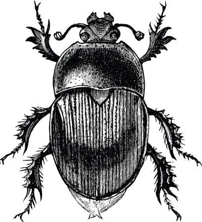 Photo pour Scarabée de coléoptère vieux livre photo - image libre de droit