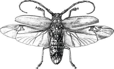 Photo pour Vieux scarabée volant de livre photo - image libre de droit