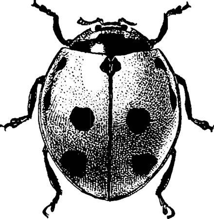 Photo pour Coccinelle de coléoptère vieux livre photo - image libre de droit