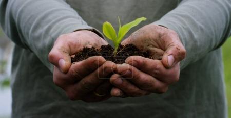 Photo pour Un homme tient un germe biologique de la vie dans ses mains de travail avec le sol pour planter, sur un fond vert, concept : mode de vie, agriculture, écologie, bio, amour, tradition, nouvelle vie . - image libre de droit