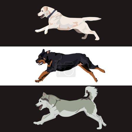 Dog vector illustration.
