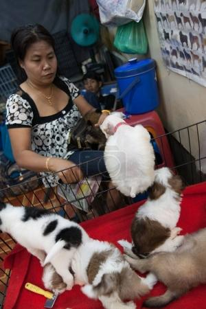 A woman selling puppies in Chatuchak market, Bangkok