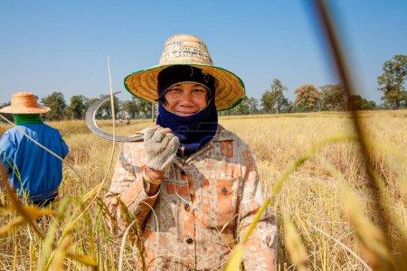 Photo pour KHON KAEN, THAÏLANDE - 22 NOVEMBRE 2007 : Une agricultrice récolte du riz à la main, dans une rizière du nord-est de la Thaïlande, pendant la saison des récoltes - image libre de droit