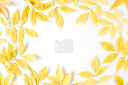 Yellow fall autumn leaves