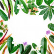 Topical exotic colored leaves frame on white background. flat lay, top view