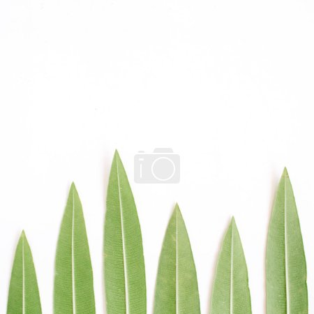 Photo for Green tree leaves. Flat lay, top view. Nature concept - Royalty Free Image