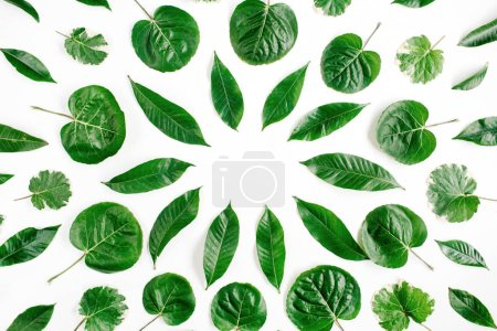 Frame wreath of green leaves on white background, Flat lay, top view. Flower background.