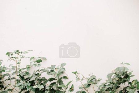 Photo pour Buisson de feuilles vertes près du mur beige. Fond floral minimaliste . - image libre de droit