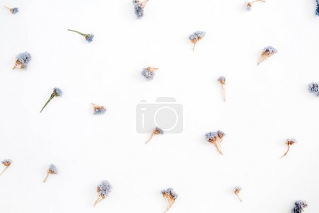 blue dried flowers on white background