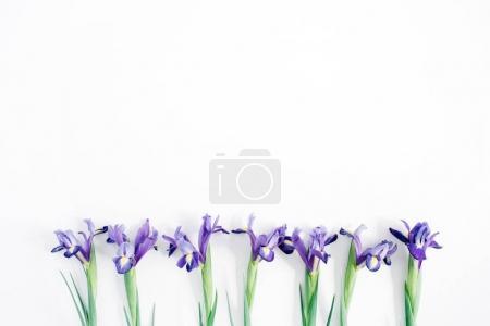 belles fleurs d'iris violet