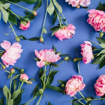 pink peony flowers pattern