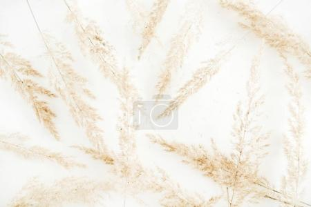 Pale dry branches pattern