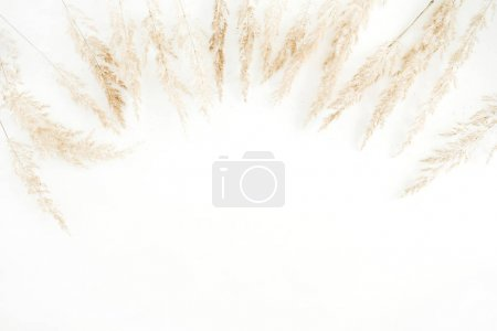 Photo for Pale dry branches frame on white background. Flat lay, top view. - Royalty Free Image