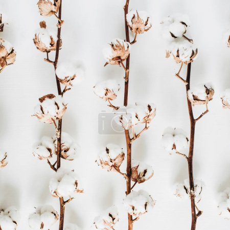 Photo for Raw cotton branches on white background. Flat lay, top view. - Royalty Free Image