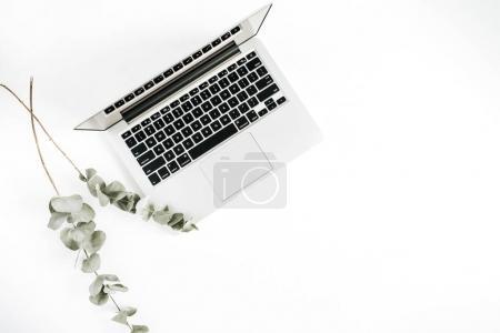 Laptop and eucalyptus. Flat lay minimal business concept.