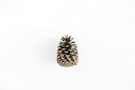 Pine cone on white background. Minimal flat lay.