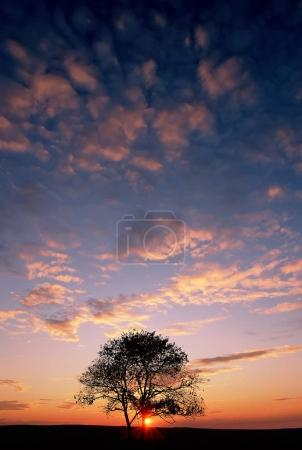 cloudy sky with dry tree