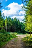 Photo of dirt road in forest in Carpathian mountains