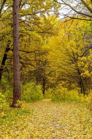 Photo of orange autumn forest with leaves and road