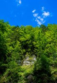 Photo of green forest on rock in Carpathian mountains