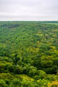 Photo of green forest panorama aerial view in saturated day