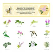 Honey set for banner flyer exhibitions posters Flowers bees and honeycomb Hand drawn design element Place for text eps10 vector