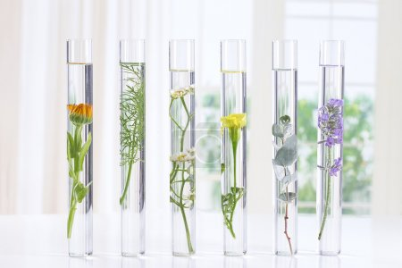 Photo for Scientific Experiment - Flowers and plants in test tubes - Royalty Free Image