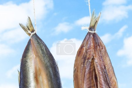 Traditionally smoked kippered herring on blue sky background