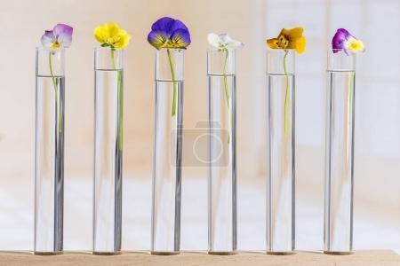 Photo pour Belles culottes, huile essentielle dans des éprouvettes en verre - image libre de droit