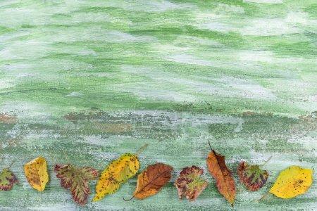 Photo pour Diverses feuilles colorées se trouvant côte à côte sur un fond en bois vert - image libre de droit