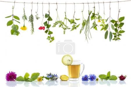 Photo pour Diverses herbes fraîches et bordure de tisane sur fond blanc plantes médicinales fraîches raccrochant - image libre de droit