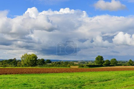 Green farmland field