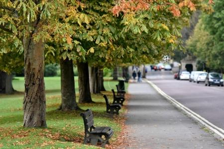 View of parked cars, walking people, empty benches and green trees
