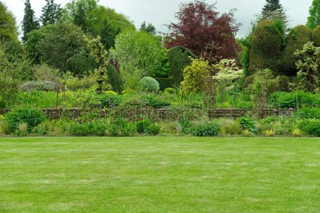 Photo for Scenic View of Green Grass Lawn in Garden - Royalty Free Image