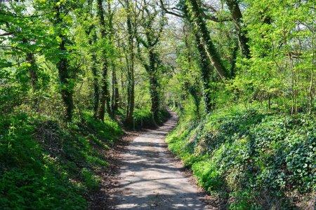 Photo pour Des arbres verts dans la forêt - image libre de droit