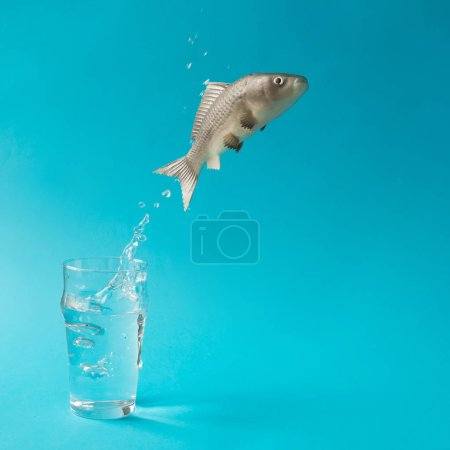 Photo for Fish jumping out of glass of water. Creative minimal concept - Royalty Free Image