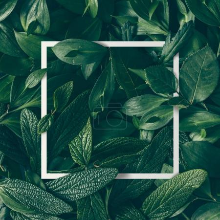 Photo for Creative layout made of green leaves with paper card note. Nature concept - Royalty Free Image