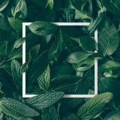 """Постер, картина, фотообои """"зеленые листья с бумажных карт границы"""""""