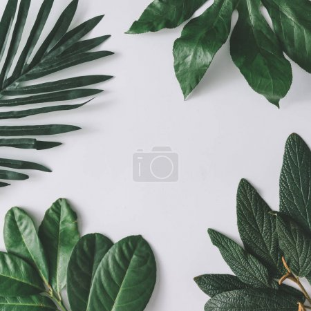 Photo for Creative minimal arrangement of leaves on white background. Nature concept - Royalty Free Image