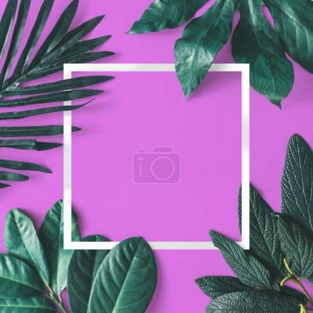Photo for Creative minimal arrangement of leaves with white frame on bright purple background. Nature concept - Royalty Free Image