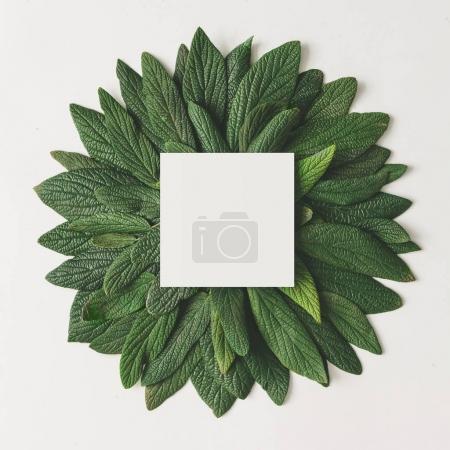 Photo pour Arrangement minimal créatif de feuilles vertes avec note de carte papier isolée sur fond blanc. Concept de nature - image libre de droit