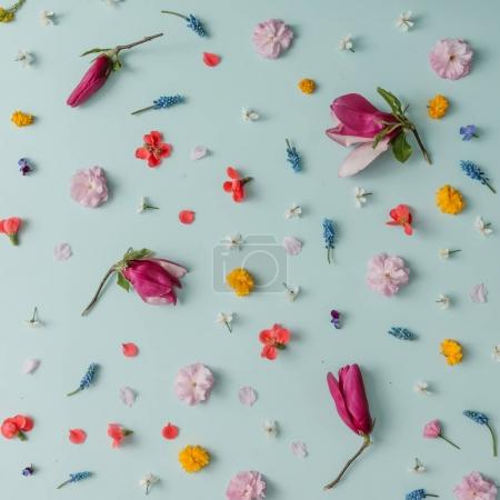Photo for Creative pattern made of colorful spring flowers on blue background. Minimal style - Royalty Free Image