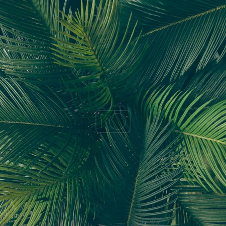 Photo for Creative layout made of tropical leaves. Nature spring concept - Royalty Free Image