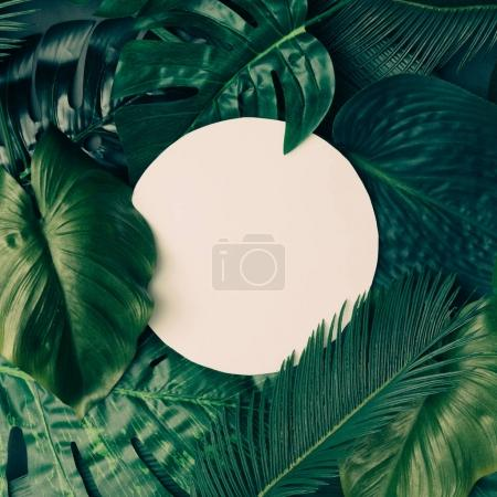 Photo for Creative layout made of tropical leaves with round paper card note. Nature spring concept - Royalty Free Image