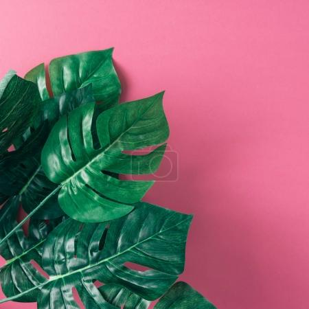 Photo for Bouquet of tropical palm leaves on pink background. Minimal nature summer concept - Royalty Free Image