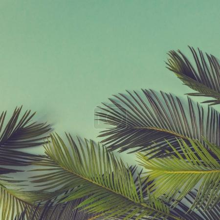 Photo for Tropical palm leaves on green background. Minimal summer concept - Royalty Free Image