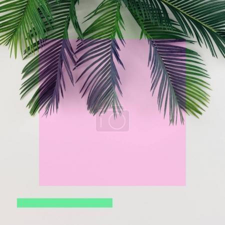 Foto de Hojas de Palma tropical sobre fondo claro. Concepto mínimo de verano - Imagen libre de derechos