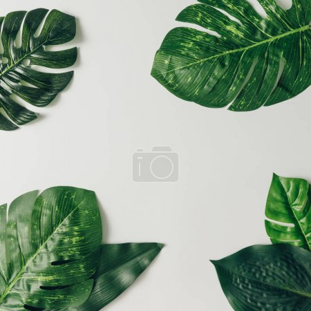Photo for Tropical green palm leaves isolated on white background. Summer minimal concept - Royalty Free Image