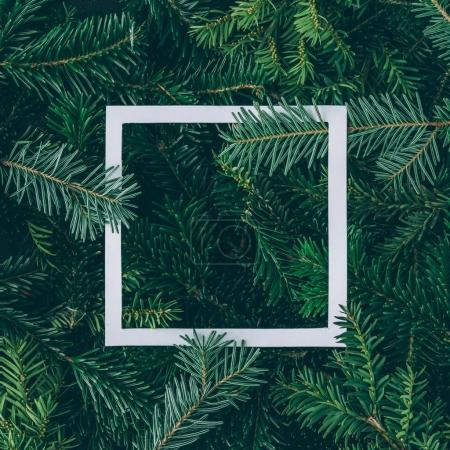 tree branches with paper frame