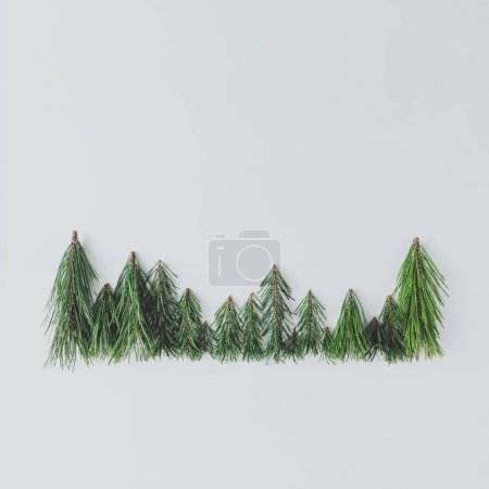 Evergreen pine forest treeline made of tree branches, Minimal winter nature concept